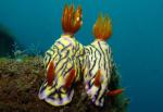 nudi_twins.jpg