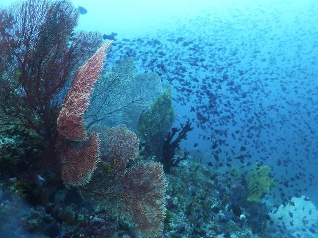 Banda: Typisches Korallenriff