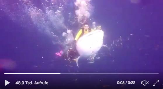 Taucher reiten auf Walhai