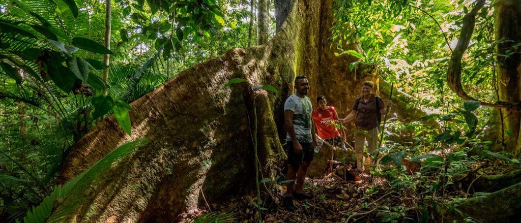 Vor einer Brettwurzel im Dschungel, Seram