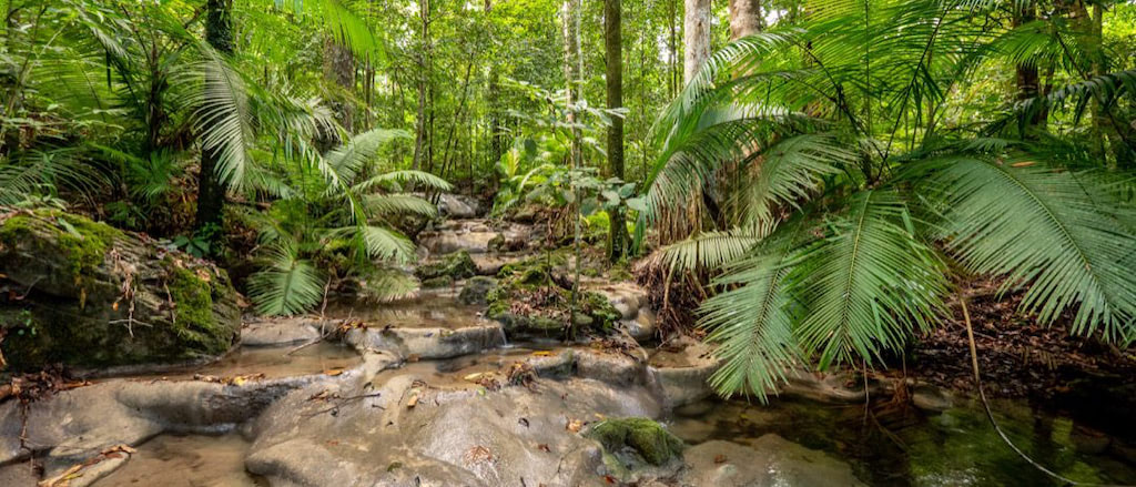 Kalksinterterrassen im Dschungel