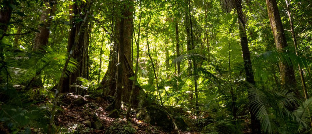 Dschungeltrekking in Seram