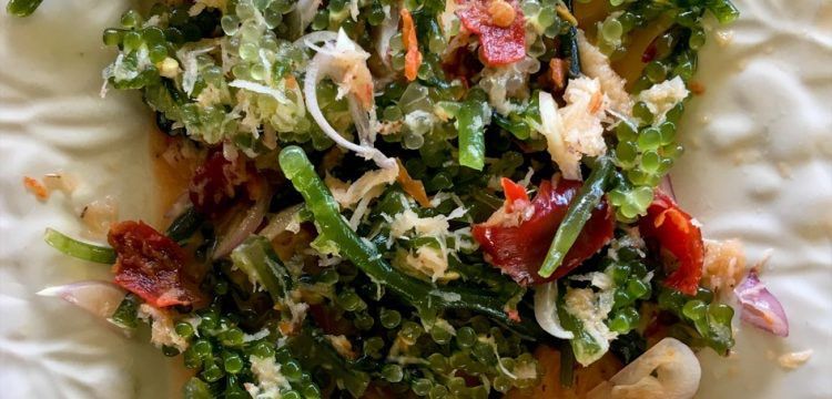 Lat - Knackiger Salat aus Meeresalgen