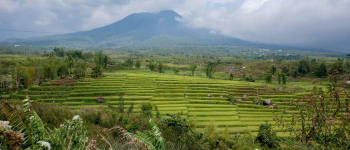 Reisfelder auf der Fahrt nach Ruteng