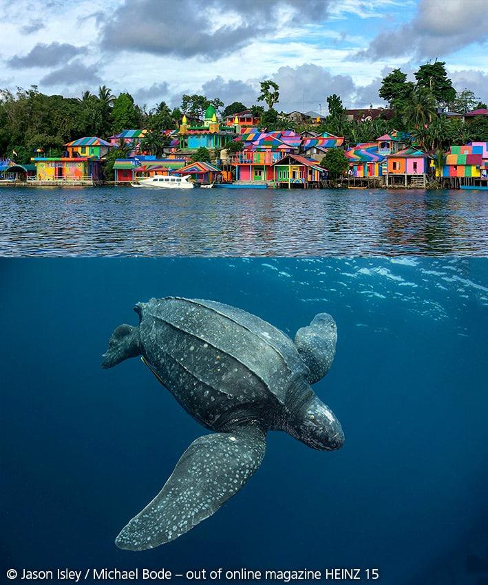 Lederschildkröten auf den Kei-Inseln