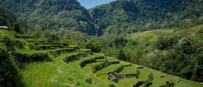 Reisterrassen und Wasserfall im Hintergrund