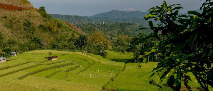 Wanderung durch Reisterrassen bei Ruteng