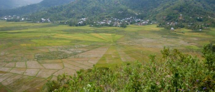 Spinnweben Reisfelder bei Ruteng, Flores