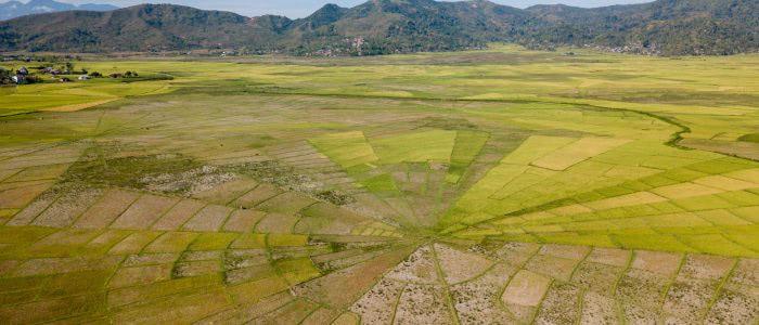Spinnweben Reisfelder in der Nähe von Ruteng