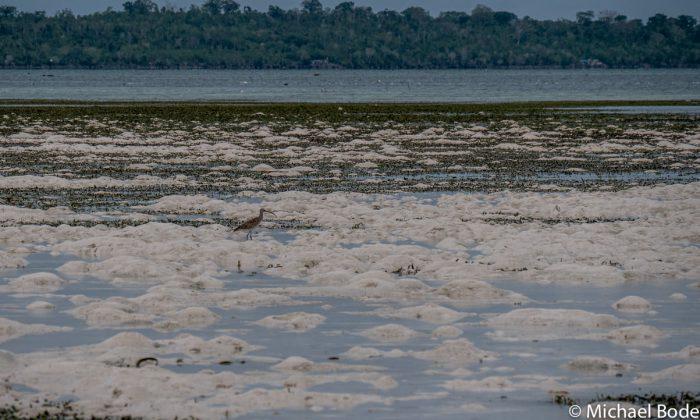Bucht von Ohoidertawun bei Ebbe, Kei Inseln