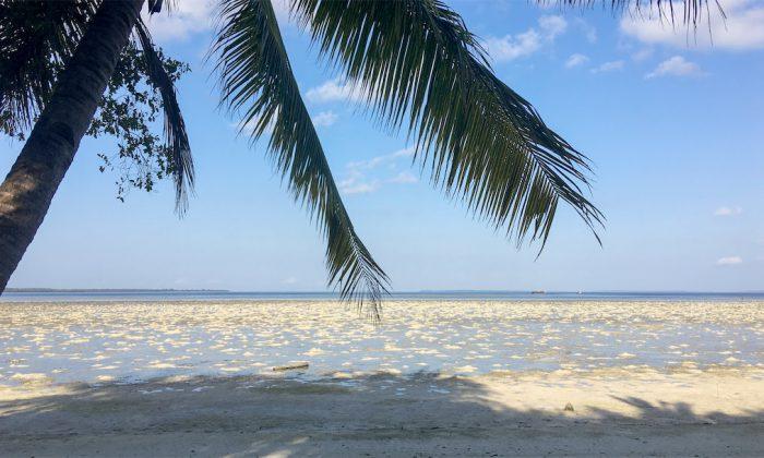 Hoga: Der Strand bei Ebbe