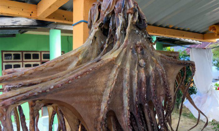 Tomia: Getrocknete Tintenfische