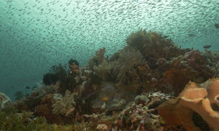 Fischschwärme vor Tomia