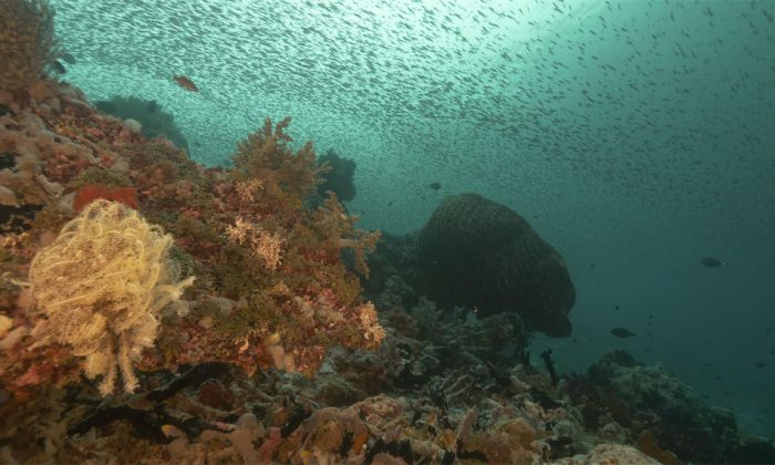 Unterwasserlandschaft vor Tomia