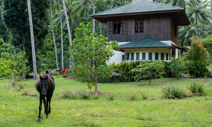 Bogani Homestay Gästehaus mit Pferd