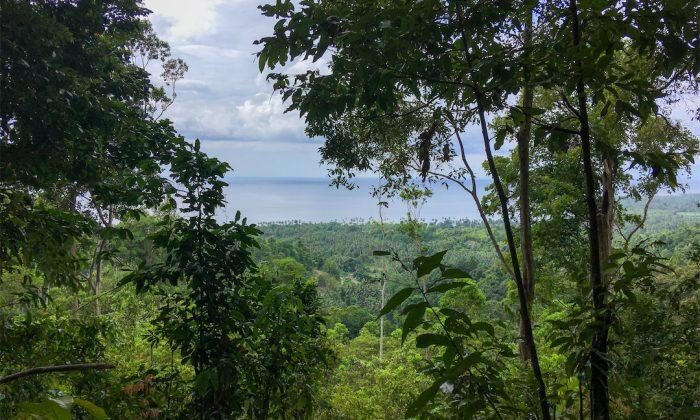 Bogani Homestay Blick während Wanderung