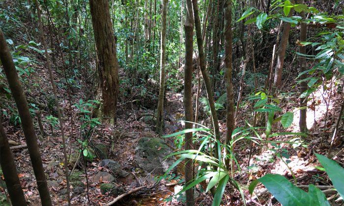 Bogani Homestay Dschungel
